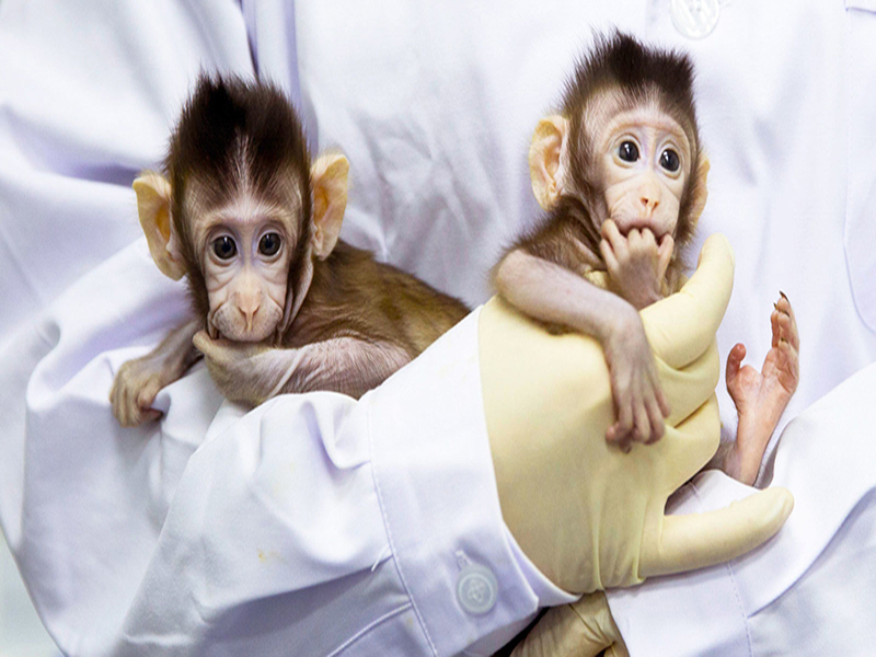 Meet cloned macaque sisters Zhong Zhong and Hua Hua